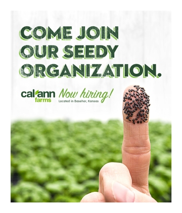 calann-recruitment-posters-seedy